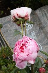Blumen der Trauer