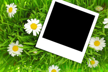 Blank photograph template on green grass with flowers