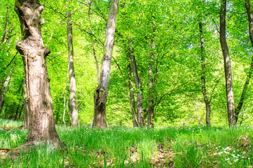 Spring Green Forest Photo with Flowers and Grass