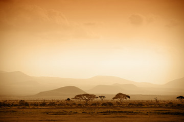 Spoed Fotobehang Zuid Afrika african savannah at sunrise