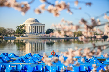 Fototapete - the Jefferson Memorial during the Cherry Blossom Festival. Washi