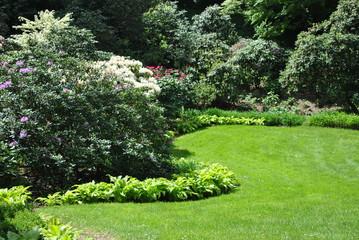 Fototapeta Rododendrony w ogrodzie obraz