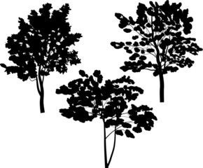 three isolated on white trees silhouettes