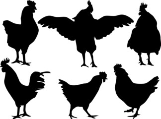six chicken silhouettes isolated on white
