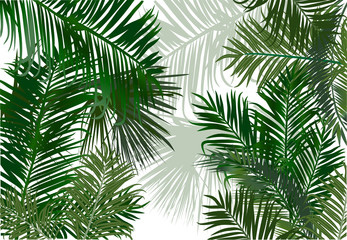 palm and fern leaves green background