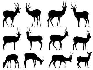 Set vector silhouettes of antelopes. Wall mural
