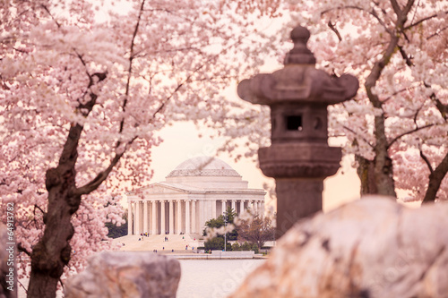 Wall mural Jefferson Memorial during the Cherry Blossom Festival. Washingt