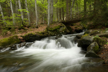 Garden Poster Forest river Mountian River