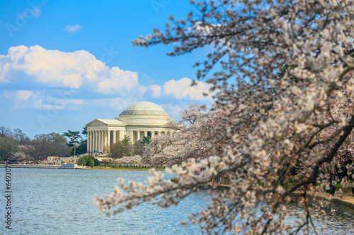 Wall mural the Jefferson Memorial during the Cherry Blossom Festival. Washi