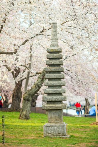 Wall mural Cherry Blossom Washington, DC