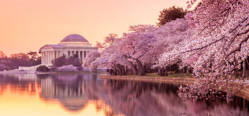 the Jefferson Memorial during the Cherry Blossom Festival Fototapete