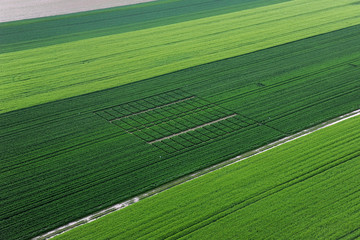 champs de salade
