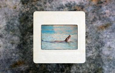 Dolphin on slide film