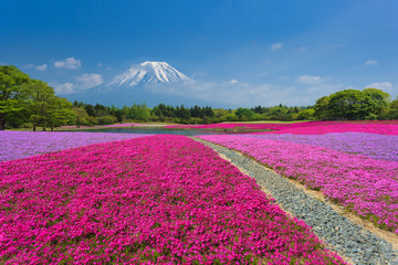 Wall Mural - Fuji with Pink Moss