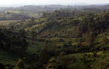Kibale Forest - Uganda