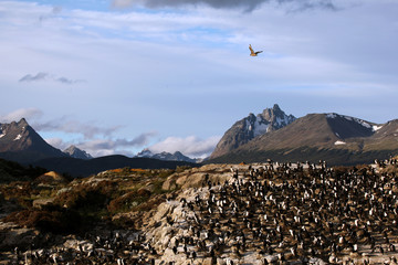 Beagle Channel - Argentina