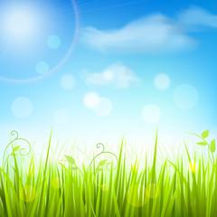 Spring meadow grass blue sky poster