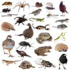 european wildlife