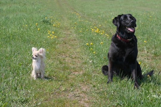 Small and big dog, black and white