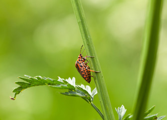 sideview of forest bug
