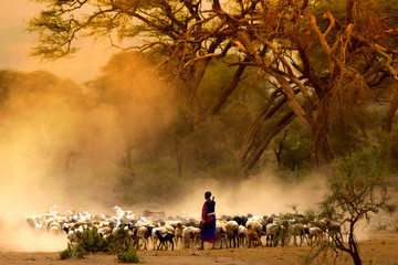 Shepherd leading herd of goats