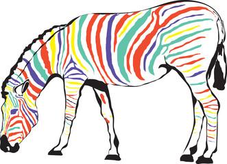 Zebra kolorowa