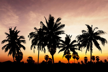 Coconut tree on twilight time