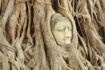 Buddha head in a tree root