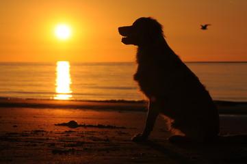 Foto auf AluDibond Hund Hond zit op het strand bij zonsondergang
