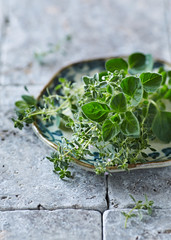 Organic Thyme and Oregano on a Plate