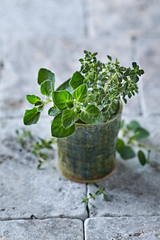 Organic Thyme and Oregano in a Ceramic Cup