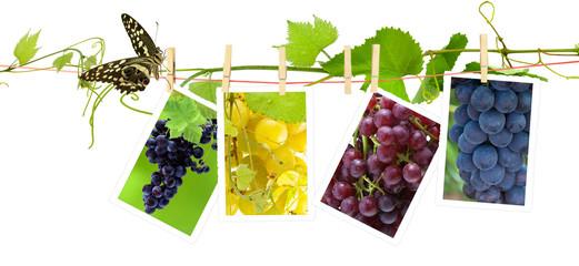 corde à linge, vigne, papillon et photos de raisins
