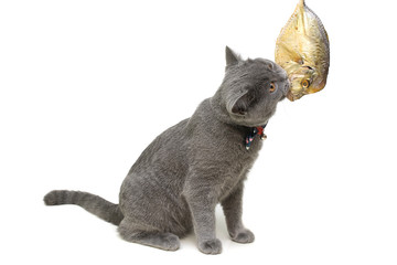 kitten eats fish on a white background close-up.