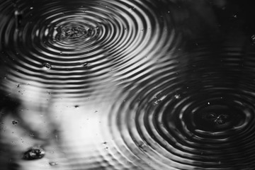 Water Striders with two round wave