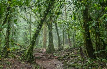 Eerie Jungle in Rainforest