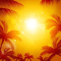 Tropical Sun among Palms