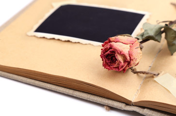 Blank old photos in album and dried flower, isolated on white