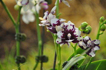 L'orchidée des floralies de nantes