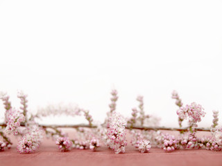Tamarix spring background