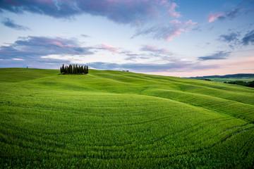 Wall Mural - Toscana, paesaggio rurale con cipressi al tramonto