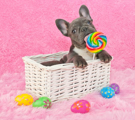 Wall Mural - Easter Puppy