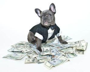 Rich Frenchbulldog