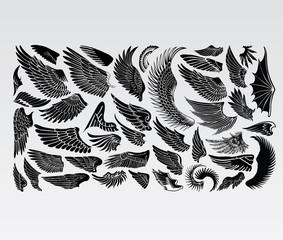 Wings Birds