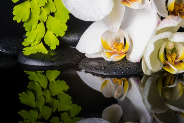Spa concept of white orchid (phalaenopsis), green branch of maid