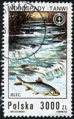 stamp printed in Poland shows fish