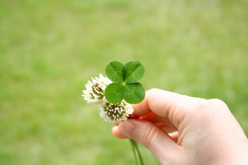 Four leaf clover and flowers