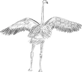 flamingo sketch isolated on white