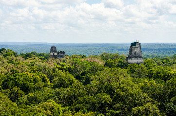 Wall Mural - View over the forest at Tikal in Guatemala