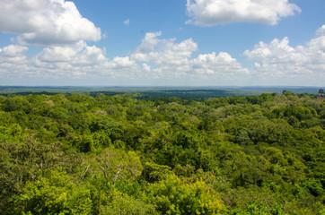 Regenwald Tikal in Guatemala