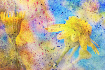 Yellow flower and messy colorful watercolor splashes